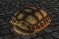 A Small tortoise shell