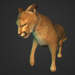 A Mountain lion